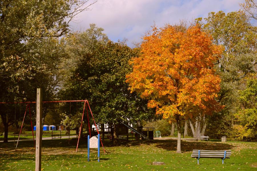 Kelly Park tree in autumn