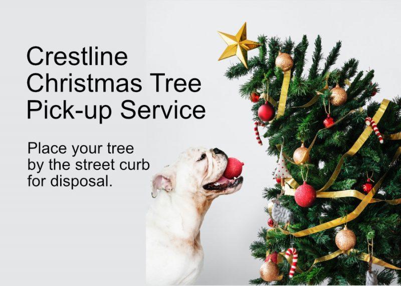 Bulldog with Christmas Tree