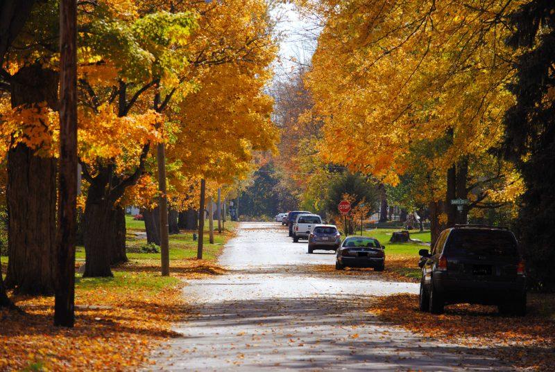 Autumn Trees in Crestline, Ohio